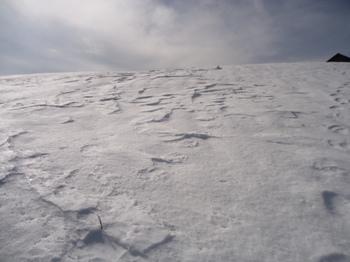 カリカリの雪.JPG